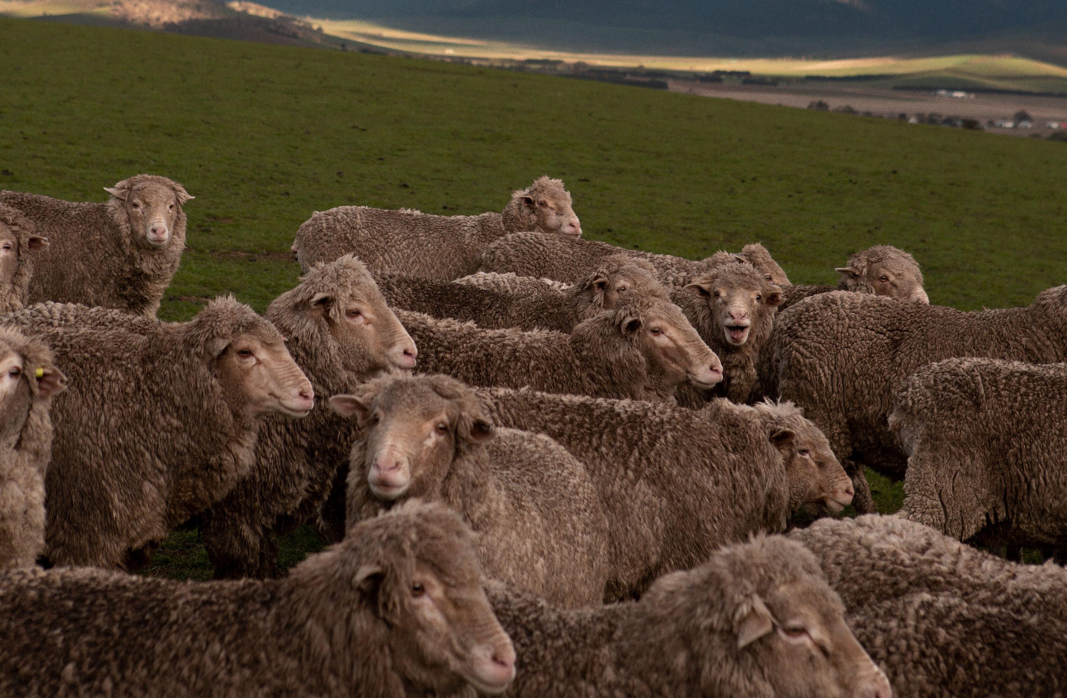 Merino wool, from Asket
