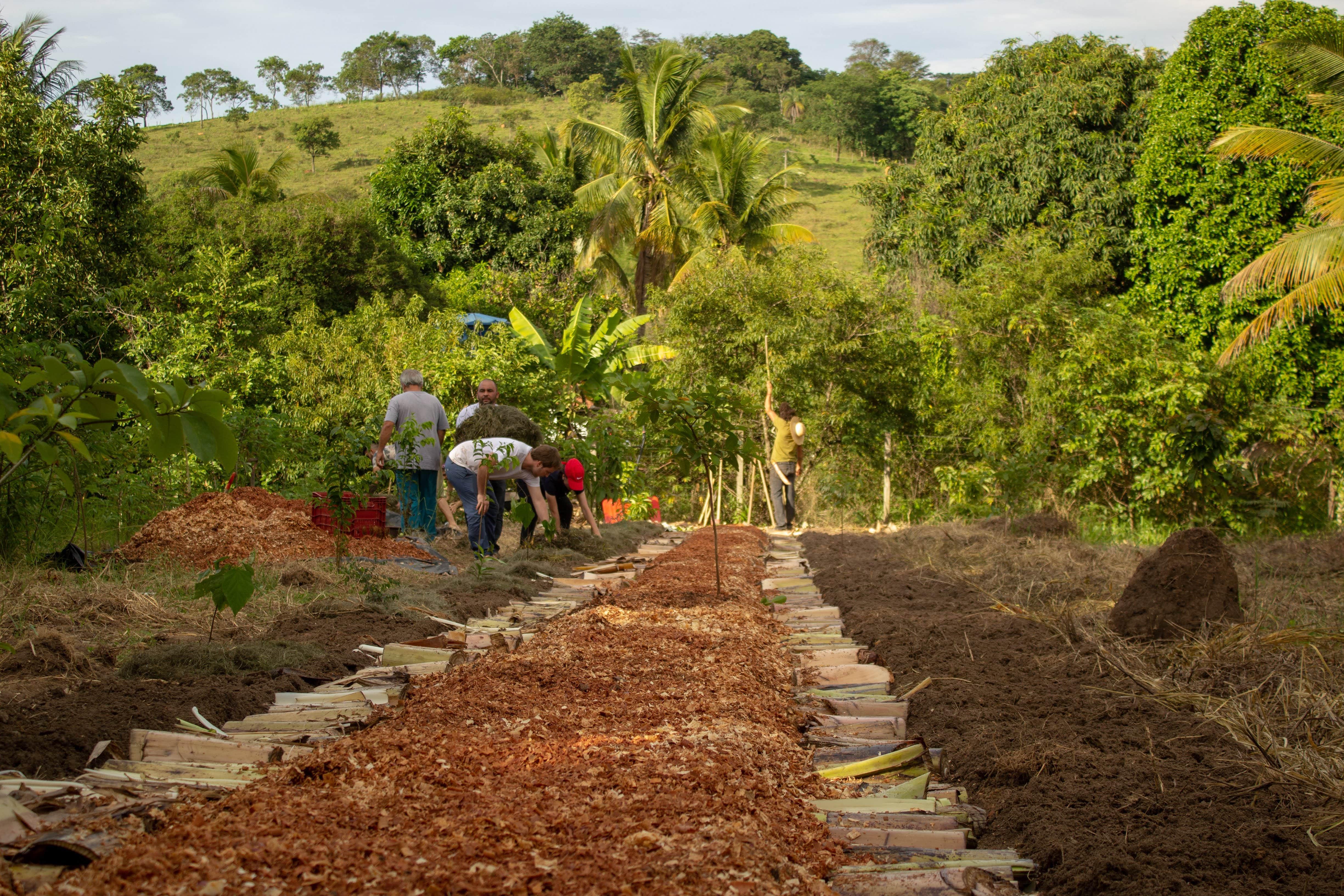 Jurema Agrofloresta Têxtil. Crédito: Kiko Moreira (22/12/2019 - Camino Verde - Itaúna MG. Plantio coletivo de agrofloresta têxtil)